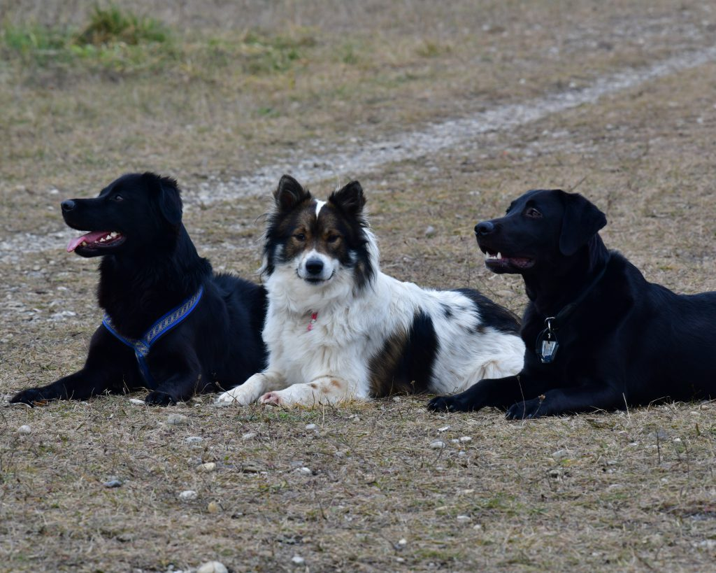 Tamu, Elly und Murphy